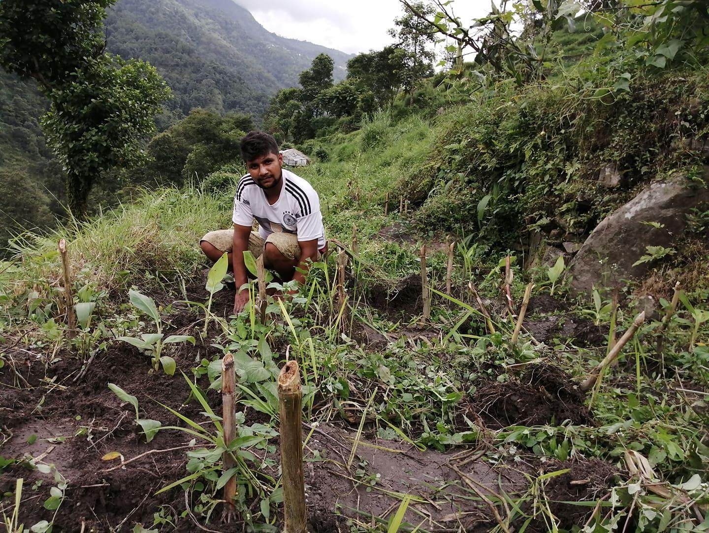 Helping out in the field Bishnu
